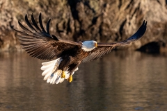 3g HP-Bald-Eagle_1DX0086