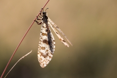 8b Insect_1DX7105