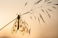 8e Insects_1DX7242