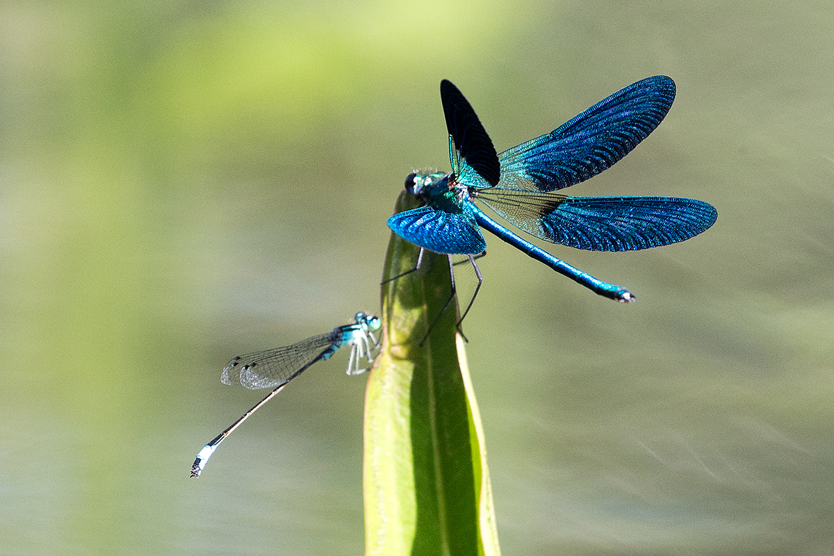 D3 Dragonfly_1DX1710